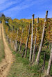 Italy's Faenza vineyards