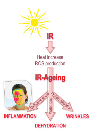 Pictogram of how infrared radiation from the sun affects skin